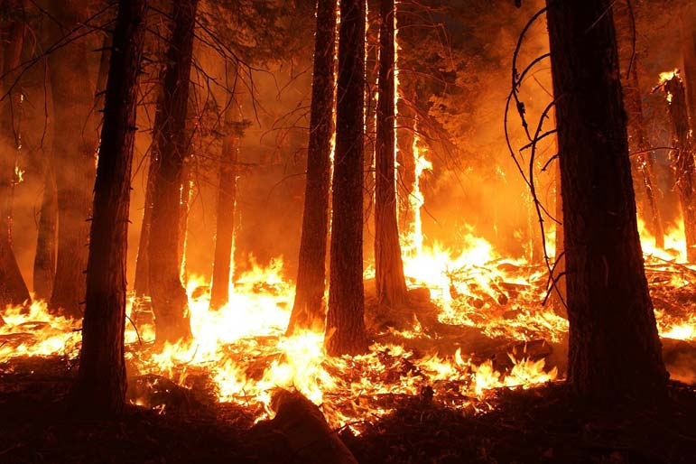 A 65,000-acre wildfire whodunit that will make your head spin
